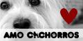 Blog - Amo Cachorros