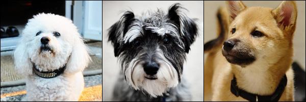 Cão ou Cachorro