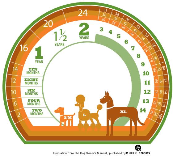 Infográfico - Idade dos cães