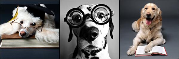 Cachorro Professor