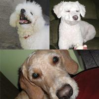 Pepe, Phoebe e Amendoim