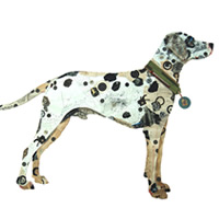 Cachorros feitos com colagens