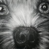 Desenho de Cachorros