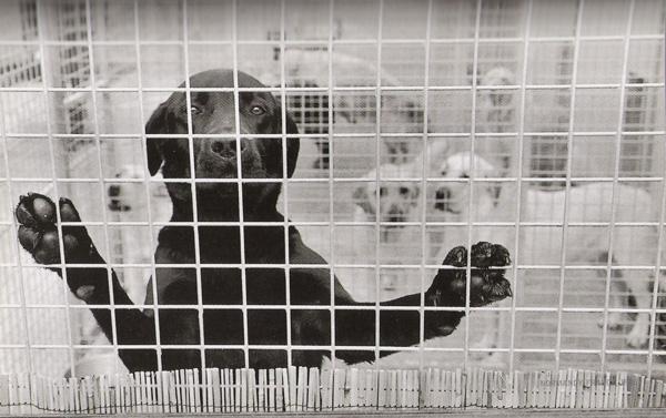 Dog Dogs