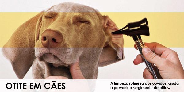 Otite em Cães