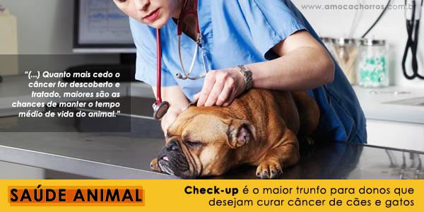 Check-up ajudar a evitar e curar o câncer de cães e gatos