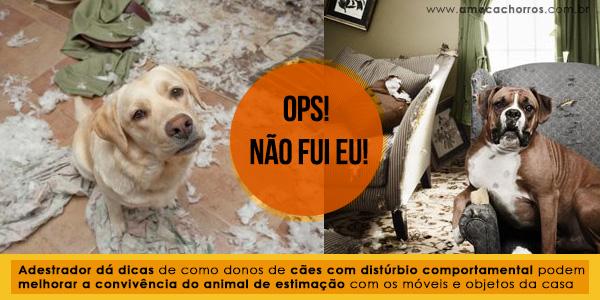 Cães destruidores de objetos