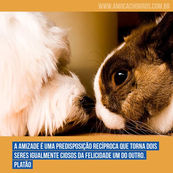 A amizade é uma predisposição recíproca que torna dois seres igualmente ciosos da felicidade um do outro. - Platão