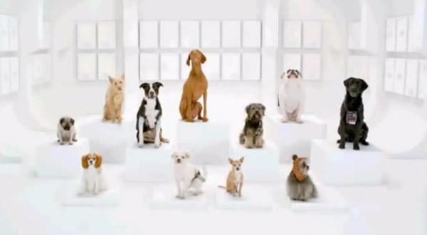 Comercial com cachorros