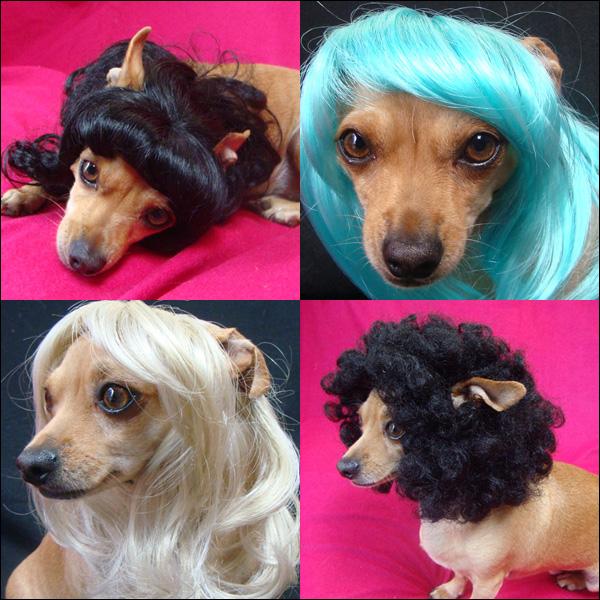 Cachorros de Perucas