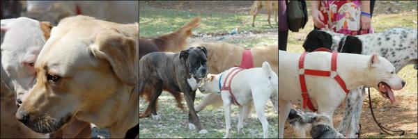 Cães na praça Amundsen
