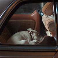 MUTE: the silence of dogs in cars