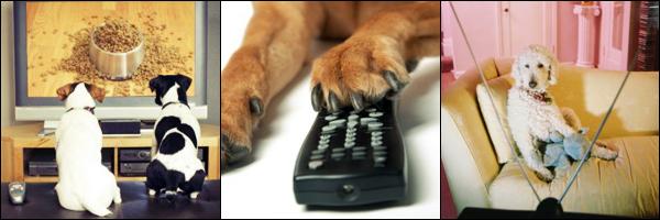 Cachorros assistindo TV
