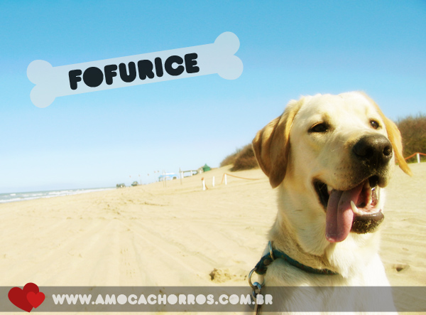 Fofurices
