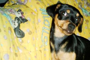 Meu AmiCÃO - Valentina