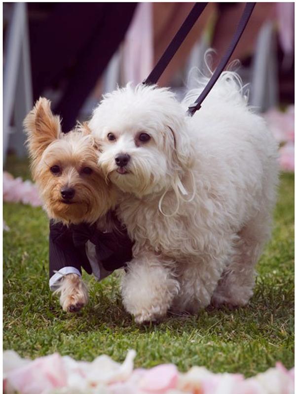 Cachorros em casamentos