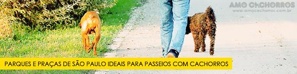 Parques e praças em São Paulo que aceitam cachorros! Confira os endereços!