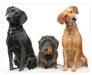 Pesquisa com cães