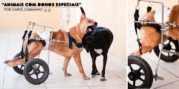 Animais com Donos Especiais
