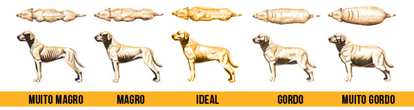 Obesidade em pets