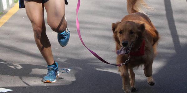 SP Dog Run - Cãorrida