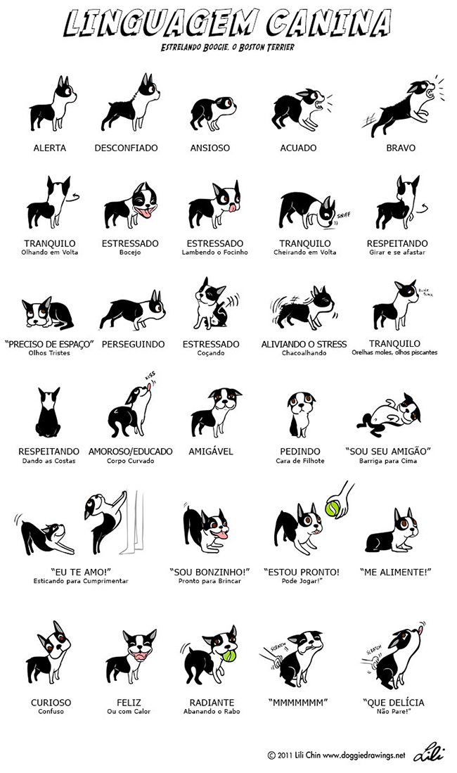 Linguagem Corporal Canina