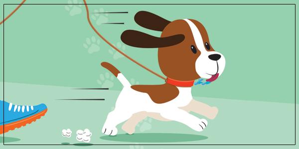 3 SP Dog Run