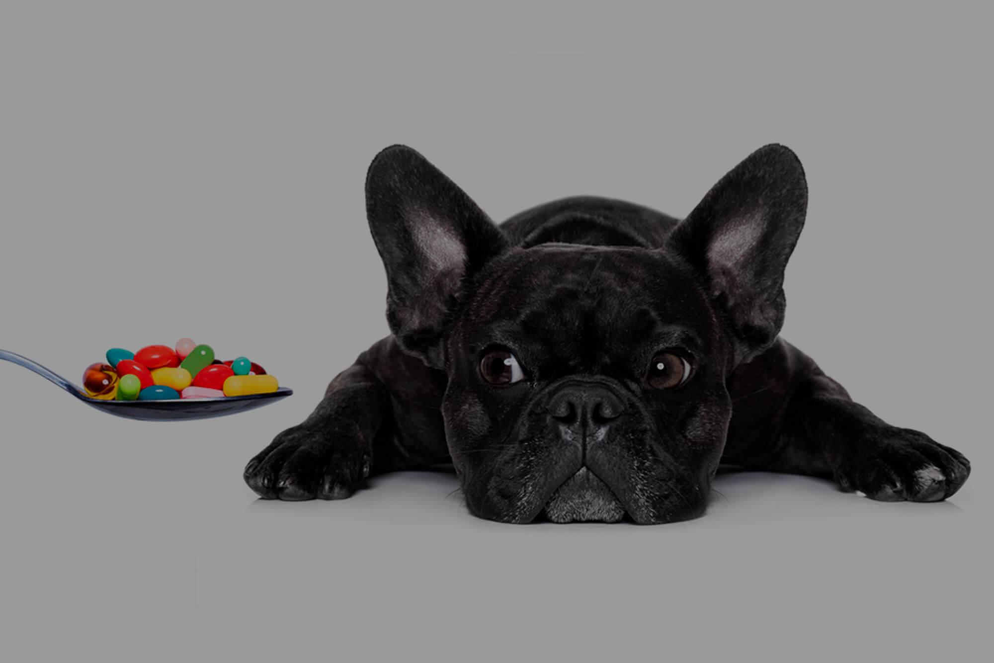 Antibióticos para cães