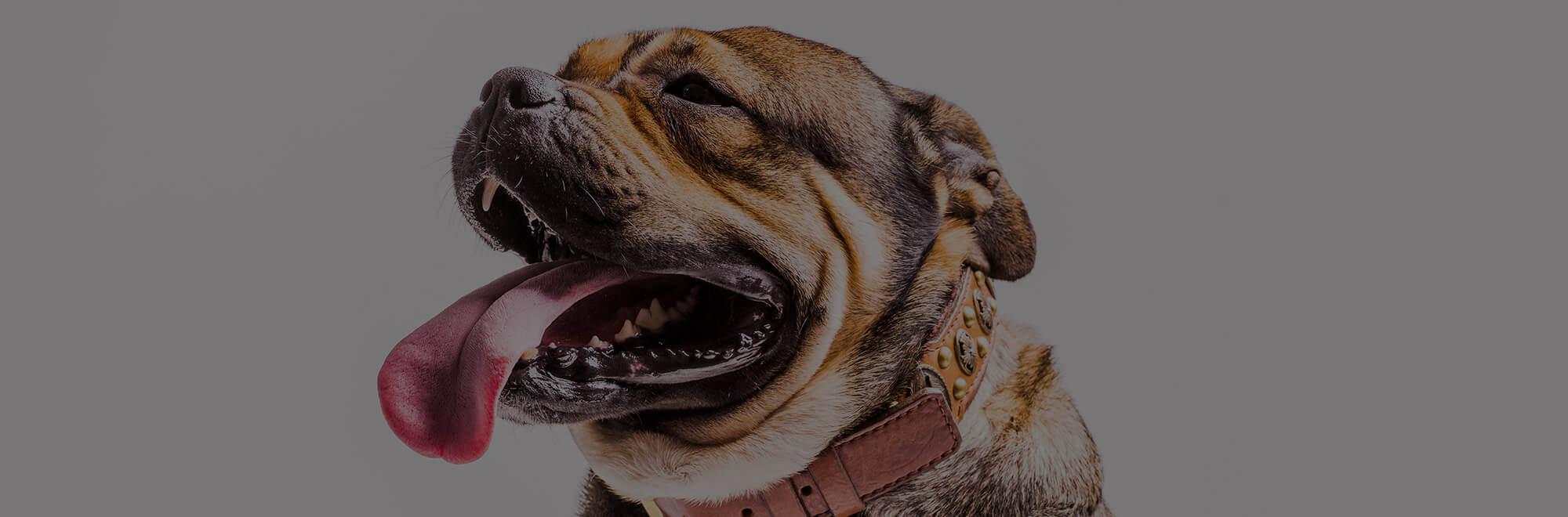 Cães podem doar sangue